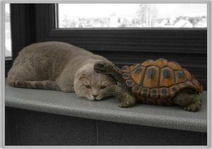 Turtle_Cat